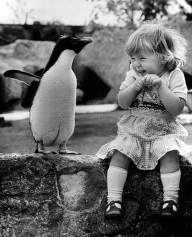 a-little-girl-encounters-a-penguin-for-the-first-time