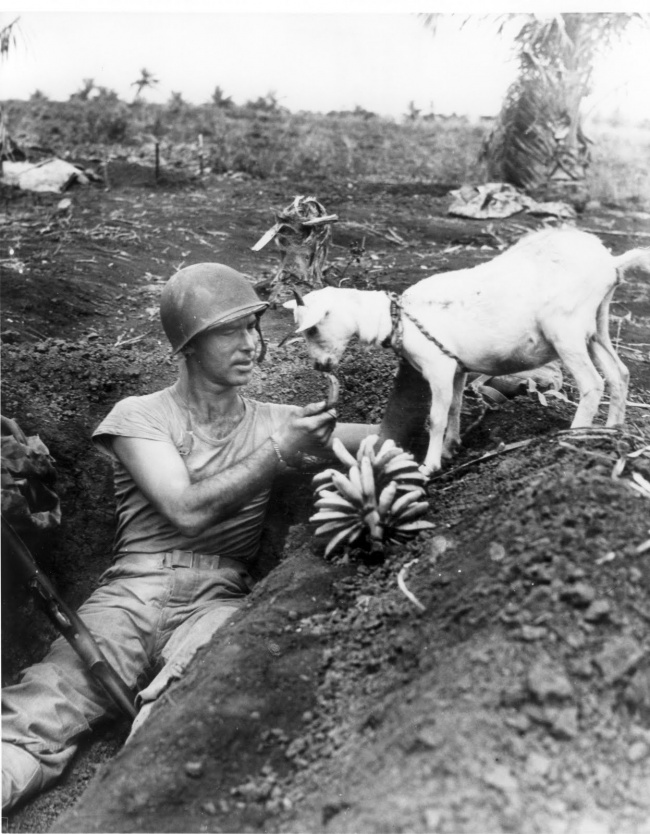 a-soldier-shares-some-bananas-with-a-goat-battle-of-saipan-1944