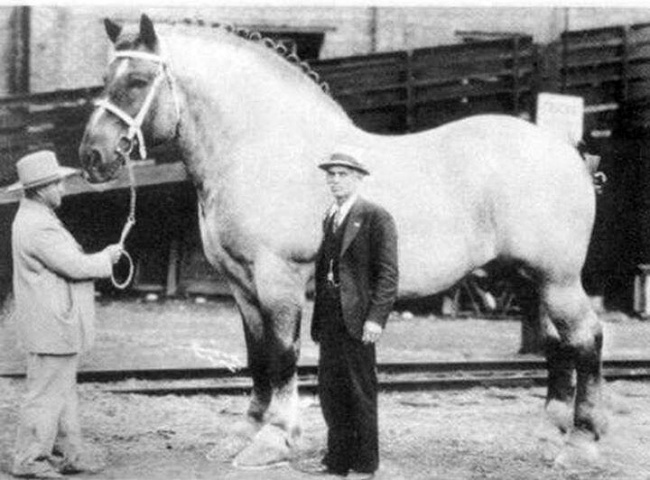 the-biggest-horse-in-the-world-1928