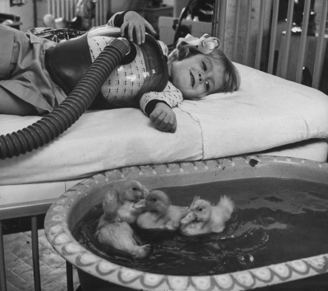 using-ducklings-as-therapy-animals-1956
